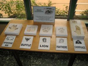 WCF | Nature center Banco
